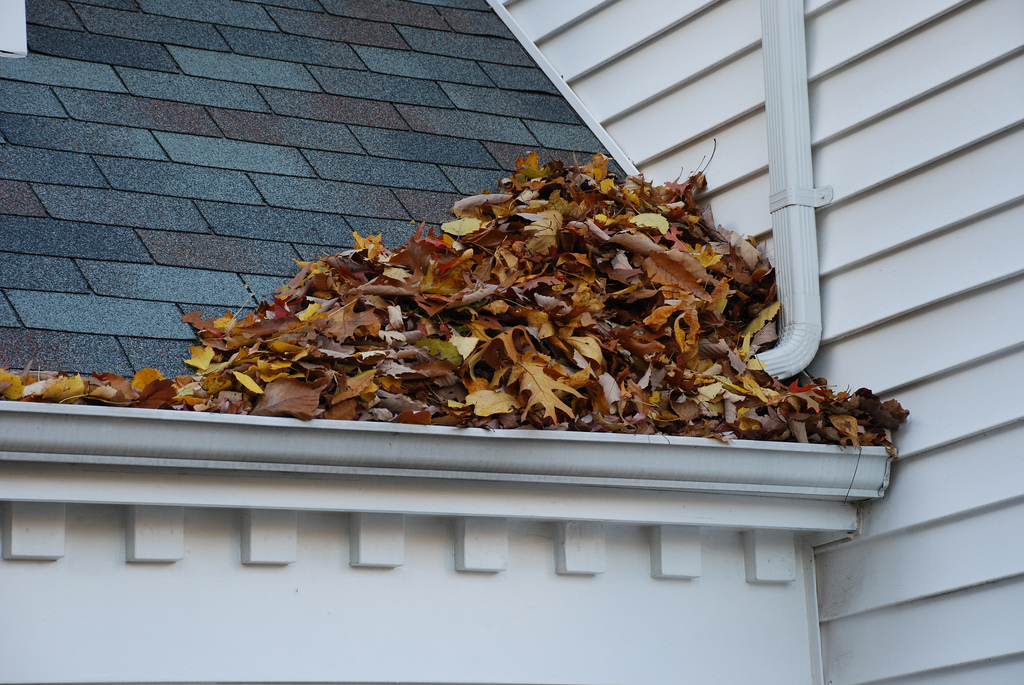 With our affordable gutter cleaning services, there's no need to lug out the ladder. Just leave it to us.